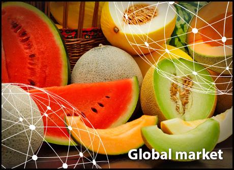 全球市场报告:瓜类