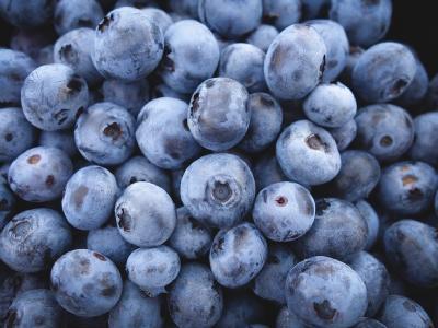 中国蓝莓产业发展迅速 2026年产量将位居世界第一