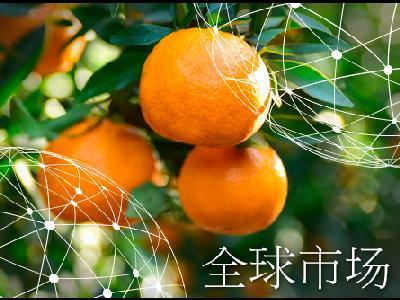 全球市场报告:柑橘
