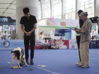 CGC 伴侣犬社会化测试大赛精彩瞬间