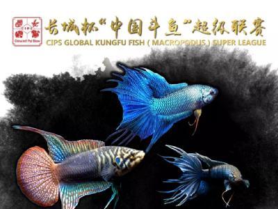 长城杯中国斗鱼超级联赛报名开启