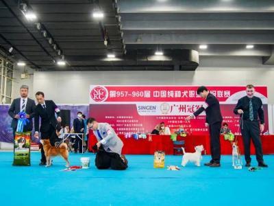中国纯种犬职业超级联赛于CIPS期间成功落幕