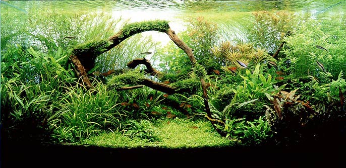 7 Best Aquascaping Style For Aquariums Cips Pet China News