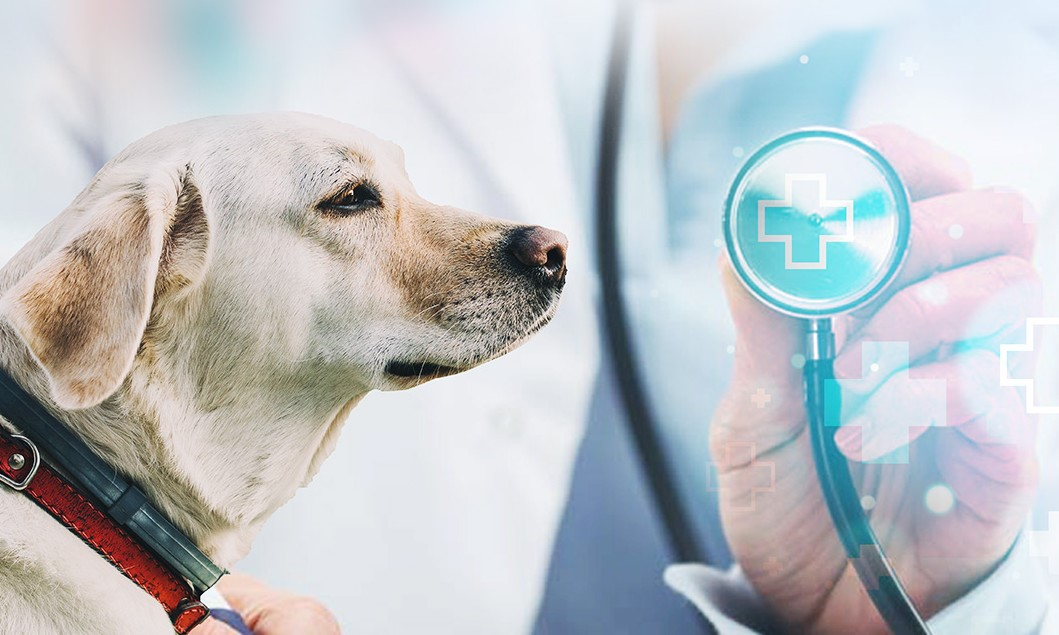 Online Vet-Pet Cloud Hospital