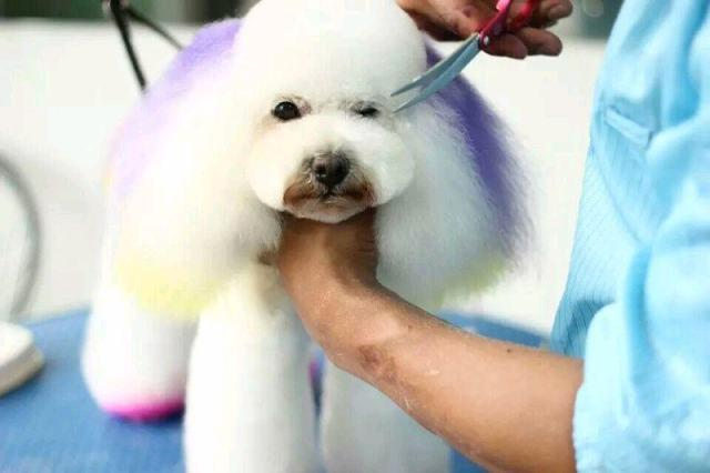 Pet service industry of China is in rapid growth