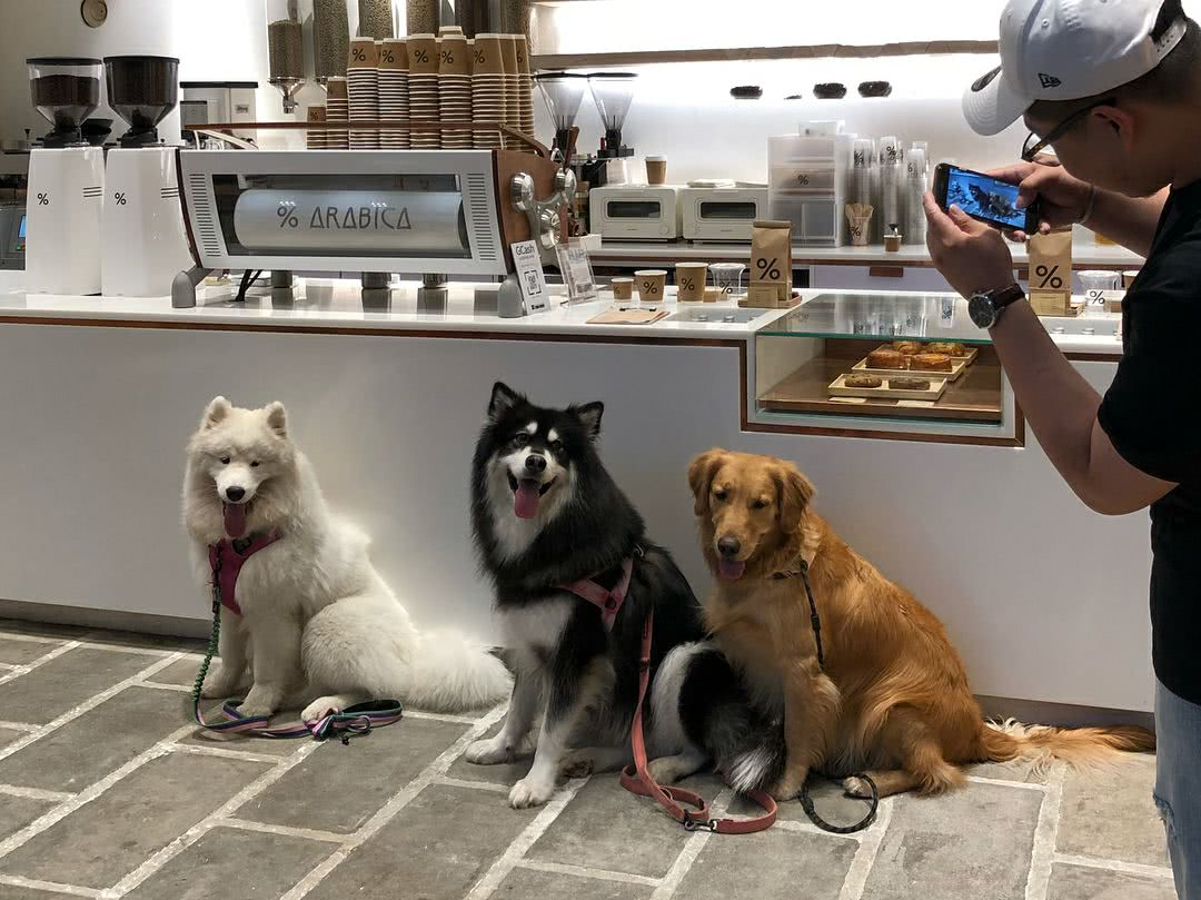 Pet-friendly service is in trend in China