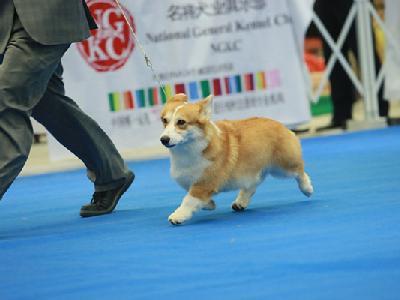 2015年北京站——中国纯种犬超级联赛