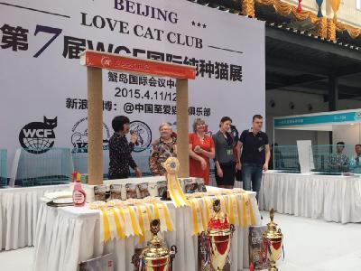 2015年北京站——北宠节纯种猫