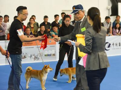 2016年北京站——NGKC首届柴犬单独展