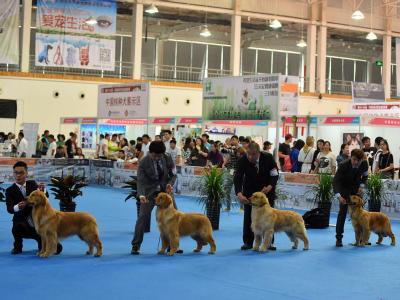 2016年北京站——NGKC中国纯种犬职业超级联赛