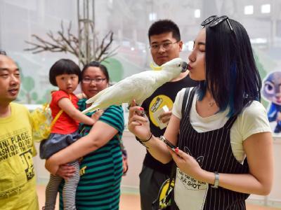 2016年北京站——疯狂动物城