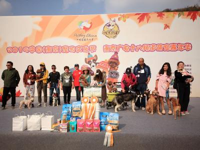 2019年南京宠物文化节
