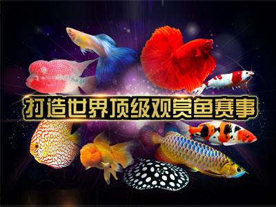"""""""长城杯""""世界观赏鱼锦标赛,水族奥斯卡拉开序幕"""