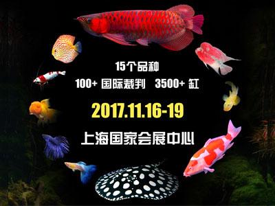 """2017年""""长城杯""""世界观赏鱼锦标赛再攀新高"""